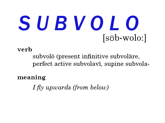 Subvolo, verb, meaning I fly upwards